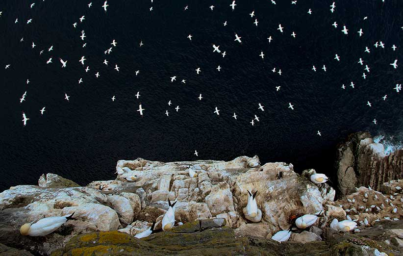 تصاویر برگزیدهی حیات وحش در مسابقهی سالانهی عکاسی لندن / گزارش تصویری