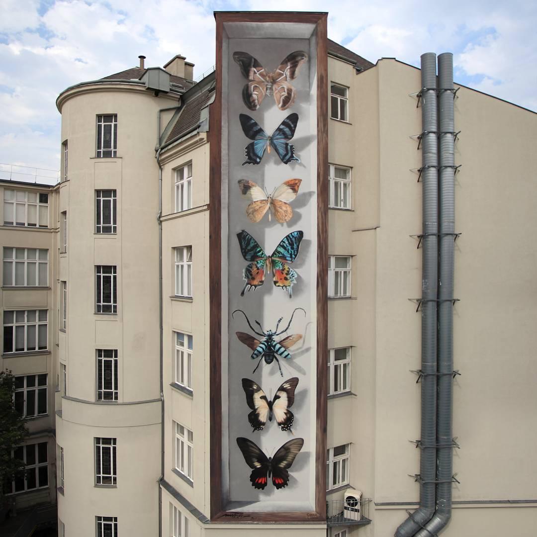 جعبه کلکسیون پروانه ها به مثابه نقاشی دیواری