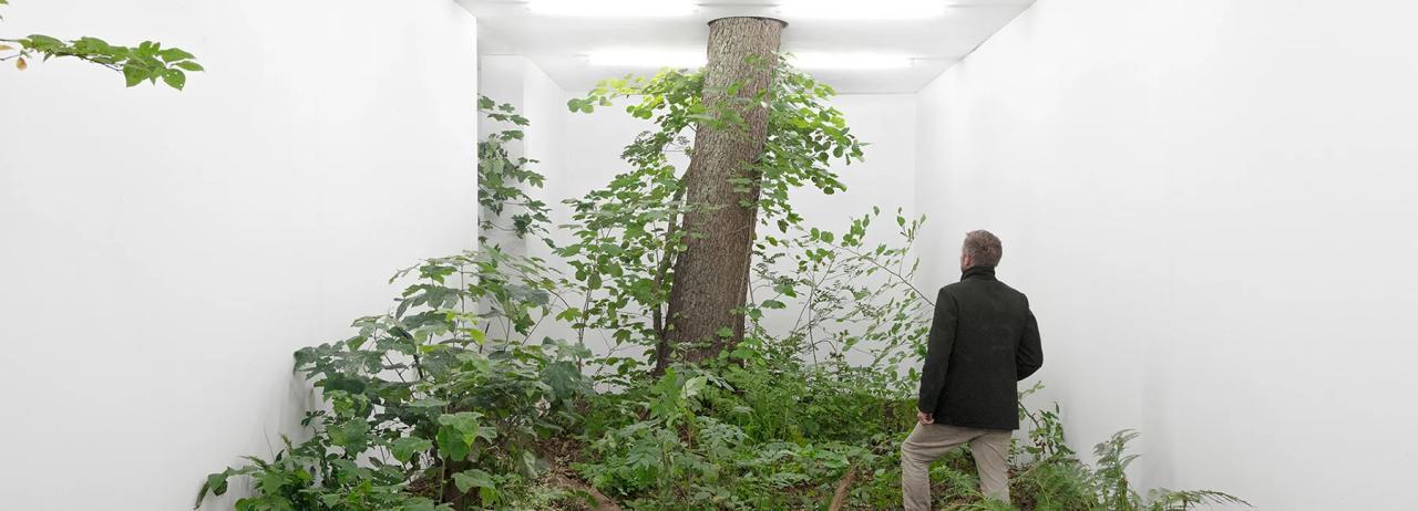 جدا سازی طبیعت توسط دیوارهای گالری