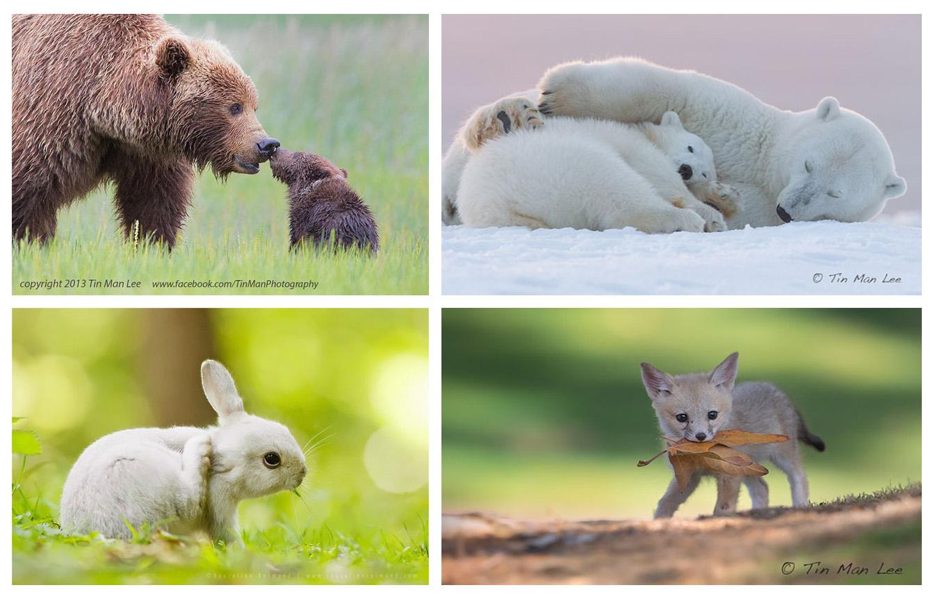 نگاهی به عکاسی حیات وحش