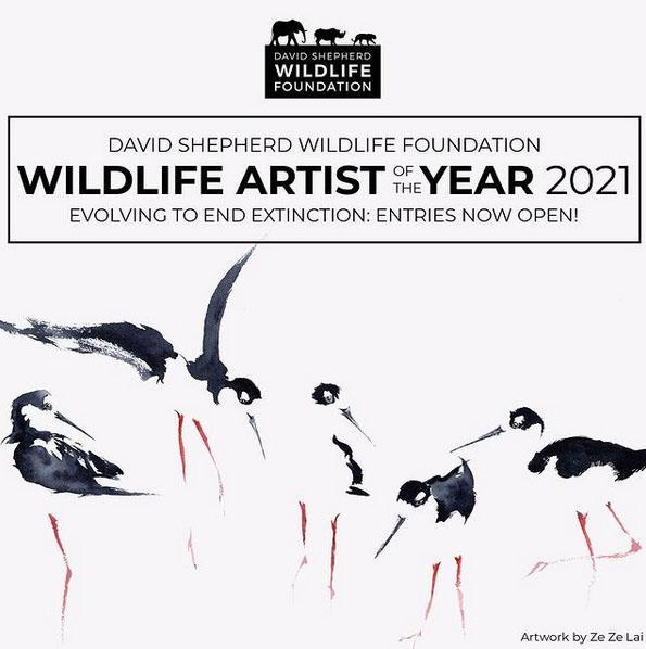 فراخوان رقابت هنرهای تجسمی Wildlife Artist of the Year