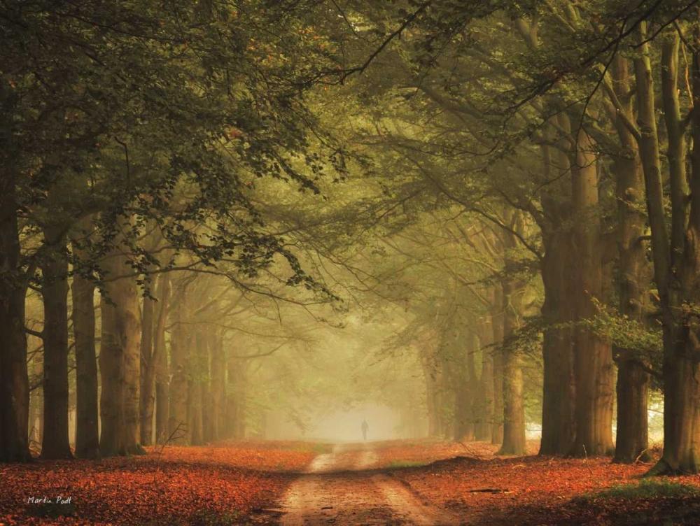 نگاهی به آثار Martin Podt، عکاس مناظر جنگلی