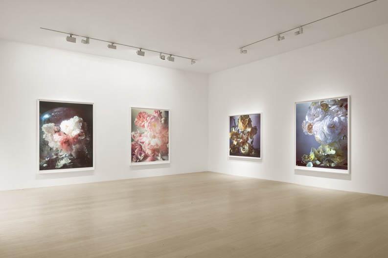 بازنمایی گلهای نقاشیهای کلاسیک در عکس