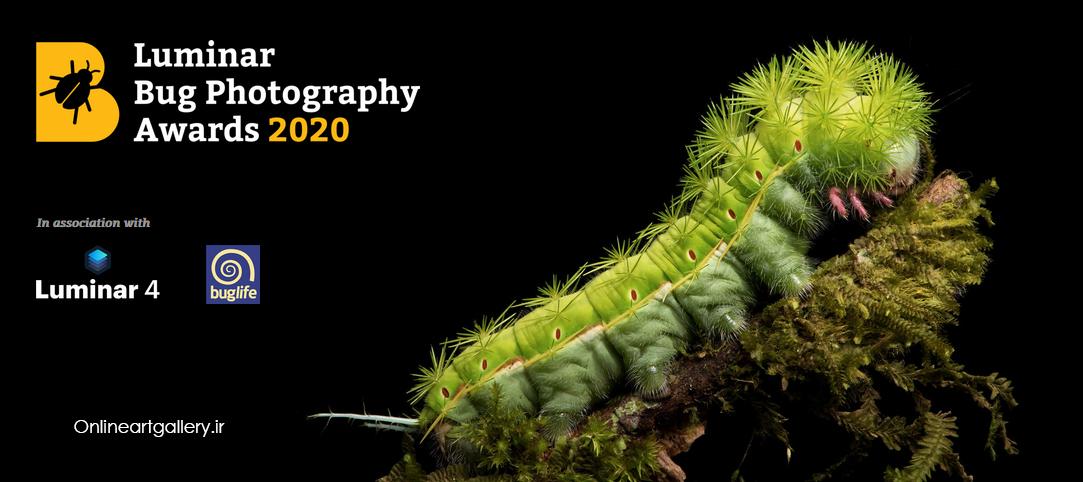 فراخوان جوایز عکاسی Luminar Bug 2020